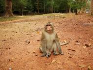 Asisbiz Terrace of the Elephants wild monkeys Cambodia 04