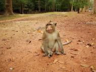Asisbiz Terrace of the Elephants wild monkeys Cambodia 05