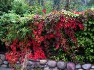 Asisbiz Ecology garden decorative plants Bornholm Denmark 01