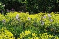 Asisbiz Travel to Claude Monet Chateau garden in Giverny France 11