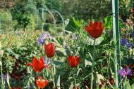Asisbiz Travel to Claude Monet Chateau garden in Giverny France 14