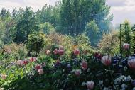 Asisbiz Travel to Claude Monet Chateau garden in Giverny France 15