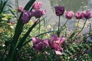 Asisbiz Travel to Claude Monet Chateau garden in Giverny France 23