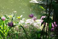 Asisbiz Travel to Claude Monet Water Lily Pond in Giverny France 05