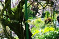 Asisbiz Travel to Claude Monet Water Lily Pond in Giverny France Japanese bridge 05