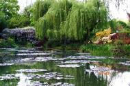 Asisbiz Travel to Claude Monet Water Lily Pond in Giverny France weeping willow 01