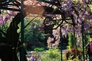 Asisbiz Travel to Claude Monet home or Chateau garden pathways in Giverny France 03
