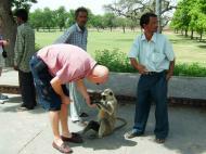 Asisbiz Uttar Pradesh Agra Sikandra Akbars Tomb monkey India Apr 2004 01