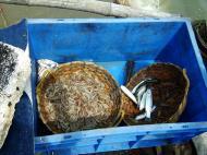 Asisbiz Chinese fishing nets Cheena vala of Fort Kochi Fort Cochin India May 2004 11