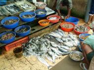 Asisbiz Chinese fishing nets Cheena vala of Fort Kochi Fort Cochin India May 2004 23