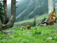 Asisbiz Kashmir Pahalgam Valley Treking by mountain pony India Apr 2004 019