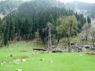 Asisbiz Kashmir Pahalgam Valley Treking by mountain pony India Apr 2004 021