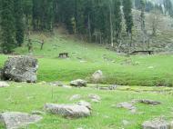 Asisbiz Kashmir Pahalgam Valley Treking by mountain pony India Apr 2004 025