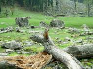 Asisbiz Kashmir Pahalgam Valley Treking by mountain pony India Apr 2004 026