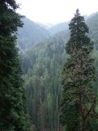 Asisbiz Kashmir Pahalgam Valley Treking by mountain pony India Apr 2004 043