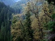 Asisbiz Kashmir Pahalgam Valley Treking by mountain pony India Apr 2004 046