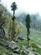 Asisbiz Kashmir Pahalgam Valley Treking by mountain pony India Apr 2004 056