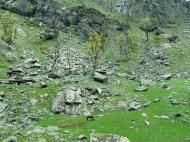 Asisbiz Kashmir Pahalgam Valley Treking by mountain pony India Apr 2004 060