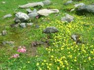 Asisbiz Kashmir Pahalgam Valley Treking by mountain pony India Apr 2004 065