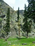 Asisbiz Kashmir Pahalgam Valley Treking by mountain pony India Apr 2004 067