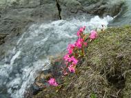 Asisbiz Kashmir Pahalgam Valley Treking by mountain pony India Apr 2004 079