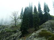 Asisbiz Kashmir Pahalgam Valley Treking by mountain pony India Apr 2004 087