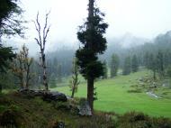 Asisbiz Kashmir Pahalgam Valley Treking by mountain pony India Apr 2004 100