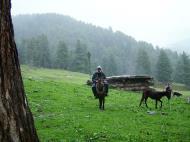Asisbiz Kashmir Pahalgam Valley Treking by mountain pony India Apr 2004 102