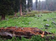 Asisbiz Kashmir Pahalgam Valley monkeys India Apr 2004 01