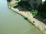 Asisbiz Kashmir Srinagar Stray Dog Controversy India Apr 2004 01