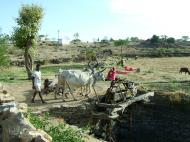 Asisbiz Udaipur to Ranakpur Bullock Irrigation well India Apr 2004 02
