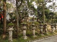 Asisbiz Kasuga taisha Kasuga Grand Shrine area stone lanterns sakura season 01