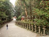Asisbiz Kasuga taisha Kasuga Grand Shrine beautiful walkways sakura Nara 02