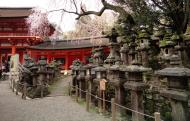 Asisbiz Kasuga taisha Kasuga Grand Shrine cherry tree and lanterns Nara sakura 02