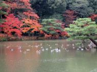 Asisbiz Kinkaku ji Temple 05 the pond of Kyoko chi Japan Nov 2009 10