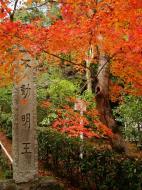 Asisbiz Kinkaku ji Temple 18 Zen Gardens Kyoto Japan Nov 2009 05
