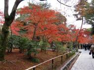 Asisbiz Kinkaku ji Temple 18 Zen Gardens Kyoto Japan Nov 2009 07