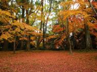 Asisbiz Kinkaku ji Temple Zen Garden Maples Kyoto Japan Nov 2009 02