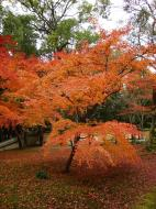 Asisbiz Kinkaku ji Temple Zen Garden Maples Kyoto Japan Nov 2009 03