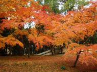 Asisbiz Kinkaku ji Temple Zen Garden Maples Kyoto Japan Nov 2009 04
