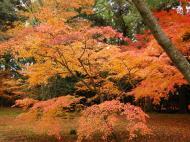Asisbiz Kinkaku ji Temple Zen Garden Maples Kyoto Japan Nov 2009 05