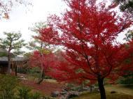 Asisbiz Kinkaku ji Temple Zen Garden Maples Kyoto Japan Nov 2009 07