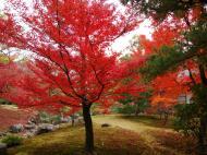 Asisbiz Kinkaku ji Temple Zen Garden Maples Kyoto Japan Nov 2009 08