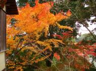 Asisbiz Kinkaku ji Temple Zen Garden Maples Kyoto Japan Nov 2009 09