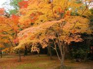 Asisbiz Kinkaku ji Temple Zen Garden Maples Kyoto Japan Nov 2009 11