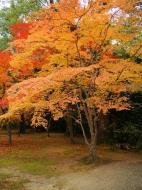 Asisbiz Kinkaku ji Temple Zen Garden Maples Kyoto Japan Nov 2009 12
