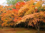 Asisbiz Kinkaku ji Temple Zen Garden Maples Kyoto Japan Nov 2009 13
