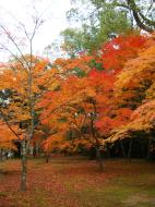 Asisbiz Kinkaku ji Temple Zen Garden Maples Kyoto Japan Nov 2009 14