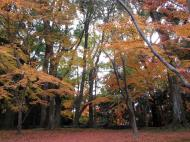 Asisbiz Kinkaku ji Temple Zen Garden Maples Kyoto Japan Nov 2009 16