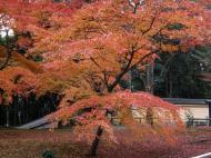 Asisbiz Kinkaku ji Temple Zen Garden Maples Kyoto Japan Nov 2009 17